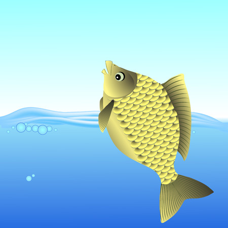 freshwater fish: Freshwater Fish Swimming in the Blue Water.