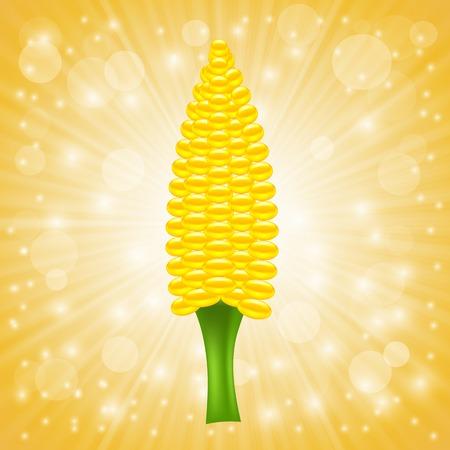 cob: Fresh Cob Corn on Sun Rays Background.