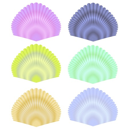 grooved: Natural Seashell Collection Isolated on White Background Stock Photo
