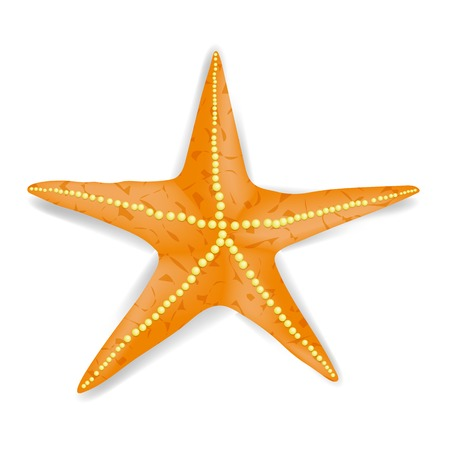 starlike: Single Realistic Starfish Isolated on White Background. Stock Photo