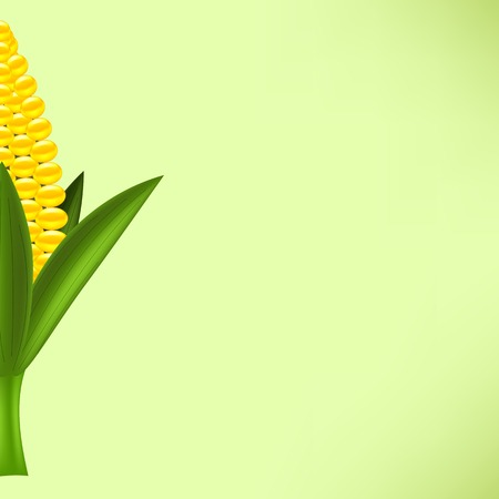 cob: Half of Fresh Yellow Cob Corn  on Green Background