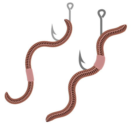 annelida: Animal Earth Red Worms for Fishing Isolated on White Background