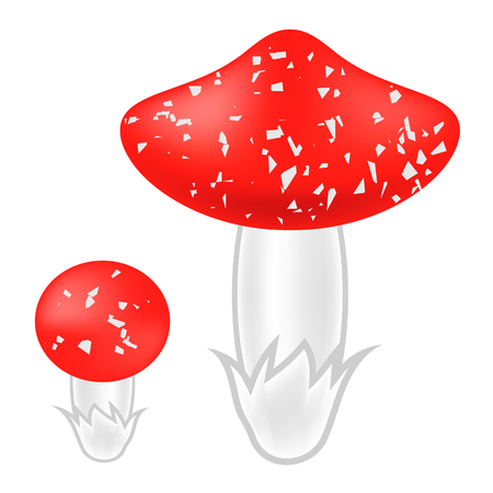 amanita: Poisonous Mushrooms Isolated on White Background. Agaric Mushroom. Amanita Poisonous Mushrooms Stock Photo