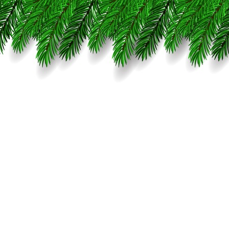 fir branch: Fir Branch on White Background. Symbol of New Year.