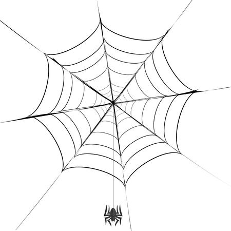 gossamer: Polygonal Grey Spider and Her Cobweb on White Background