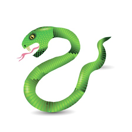 forked tongue: Cartoon Green Snakes Isolated on White Background. Illustration