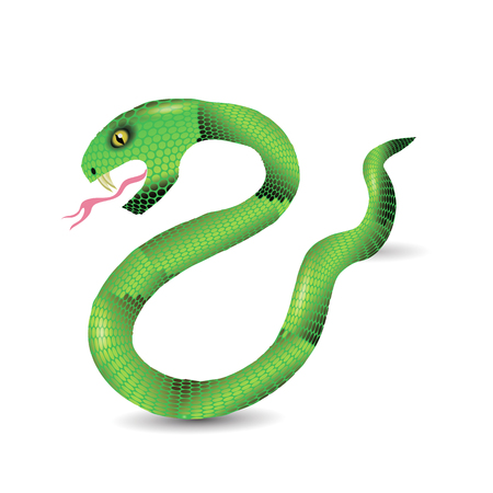 forked tongue: Cartoon Green Snakes Isolated on White Background. Stock Photo