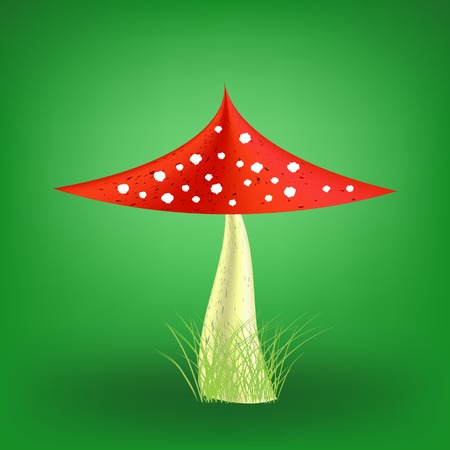 agaric: Poisonous Mushroom on Soft Green Background. Fly Agaric