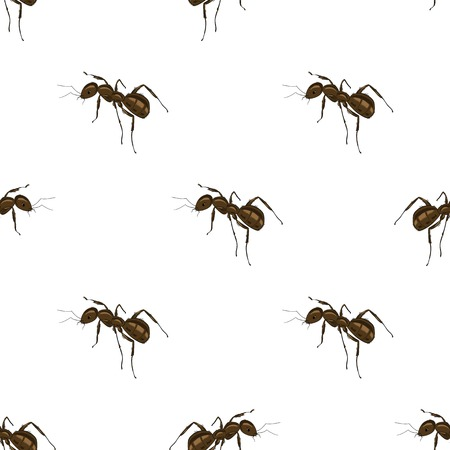 threaten: Seamless Animal Pattern. Ant Isolated on White Background.
