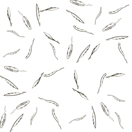 scribe: Set of Different Feathers Isolated on White Background.  Seamless Feather Pattern