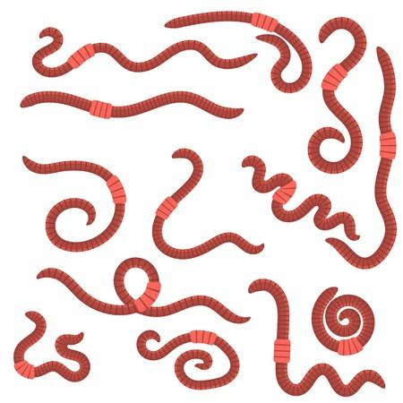 fuoco animale rosso vermi per la pesca isolato su sfondo bianco