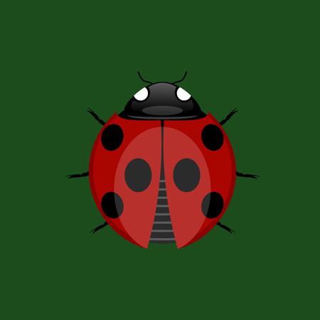 ladybug: Summer Ladybug Icon Illustration