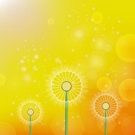 흐리게 노란 오렌지 태양 배경에 봄 민들레 스톡 콘텐츠