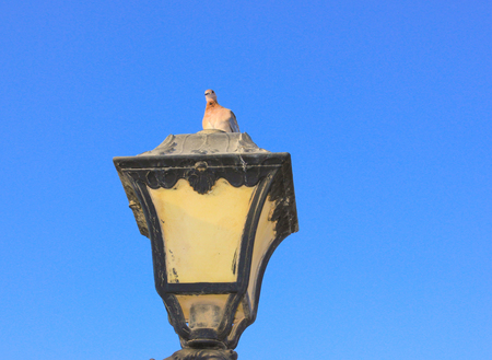 Old vintage metal street lamp and bird on blue background