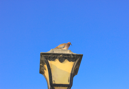 Old vintage metal street lamp and dove on blue background