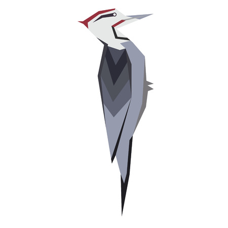 woodpecker flat illustration isolated on white. Forest animals series