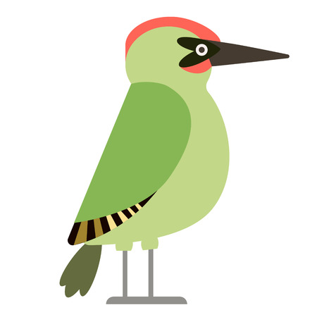 green woodpecker flat illustration isolated on white. Forest animals series