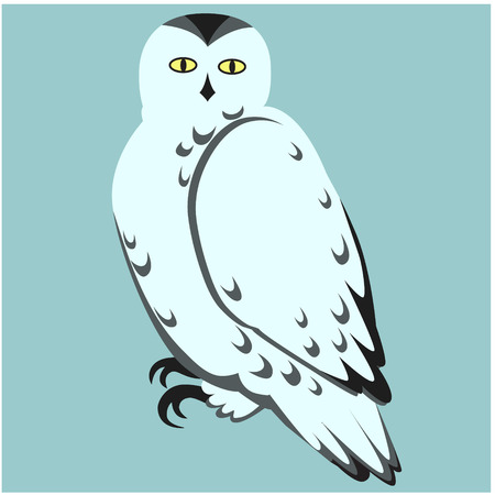 snowy owl flat illustration isolated on white. Forest animals series