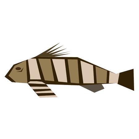 fish flat illustration isolated on white. Marine and underwater life series
