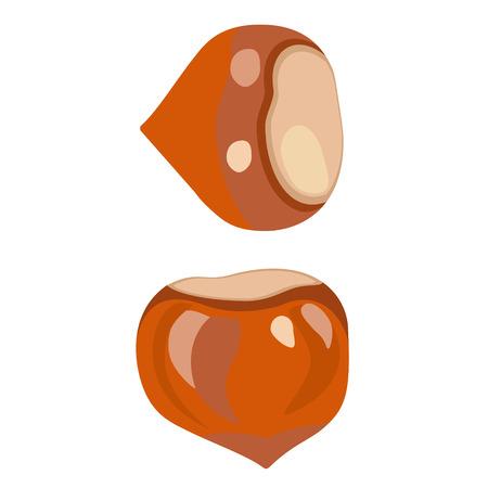 hazelnut flat simple illustration