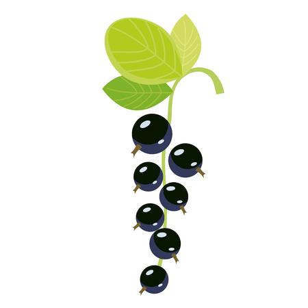 black currant flat simple illustration. Kitchen cooking - vegetables and fruits series. Иллюстрация