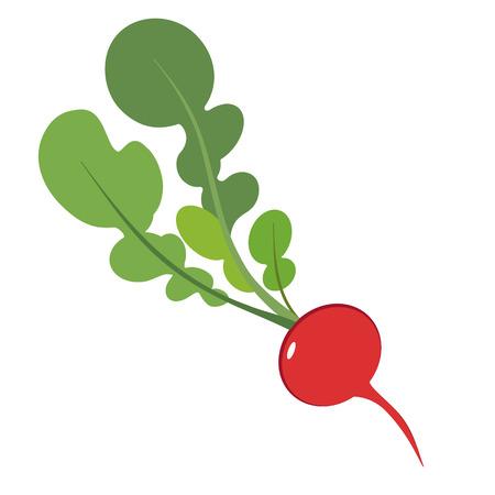 radish flat simple illustration