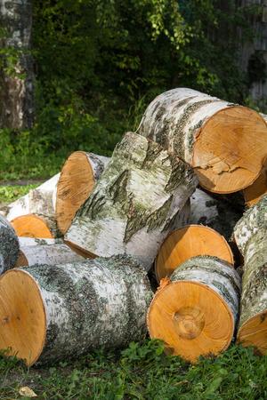 logs: logs, a felled tree Stock Photo
