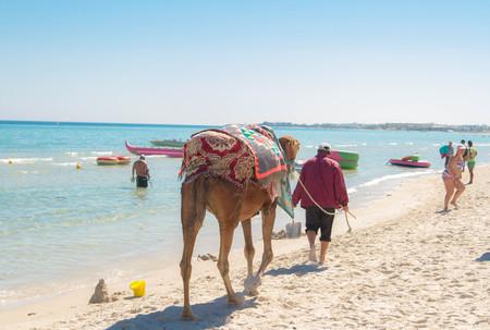 June 26, 2017. Tunisia. A camel is walking along the coast of the Mediterranean Sea.