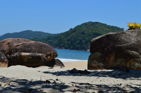 subtropical: subtropical beach