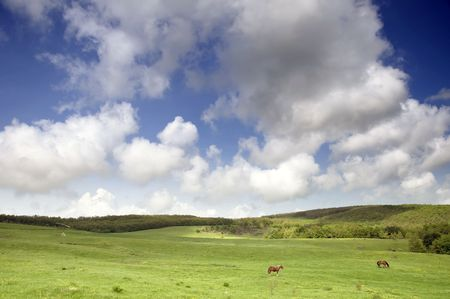 greenfield: Greenfield with horses and blue sky on a rural place Stock Photo