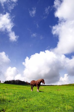 greenfield: A lonely horse on a greenfield with deep blue skies