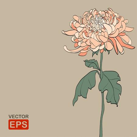 tallo: Crisantemo de la vendimia. Ilustraci�n vectorial, EPS8. Res de alta jpg incluido.