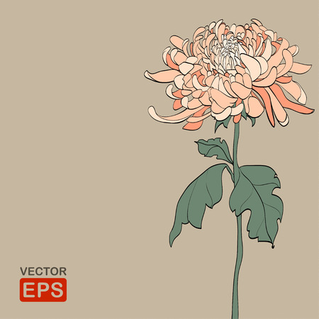 Vintage  Chrysanthemum. Vector illustration, EPS8. High res jpg included.