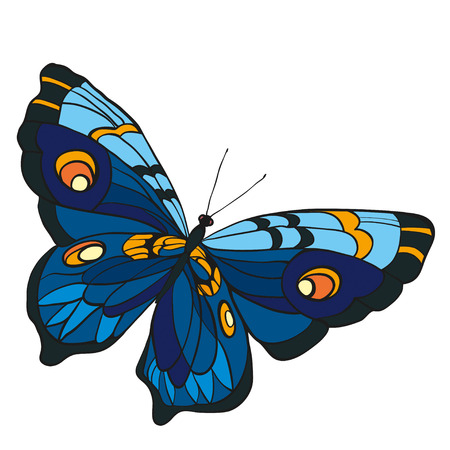 entomological: Blue butterfly with open wings in a top view on white background. Illustration