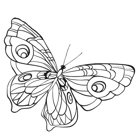 Black and white butterfly with open wings in a top view. Sketch of insect for design and scrapbooking.