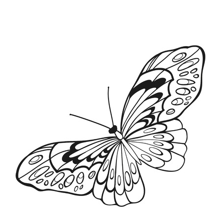 entomological: Black and white butterfly with open wings in a top view. Sketch of insect for design and scrapbooking.