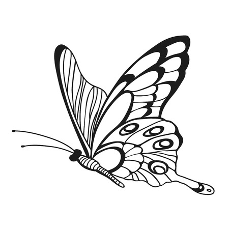 entomological: Beautiful monochrome butterfly. Sketch of insect for design and scrapbooking.