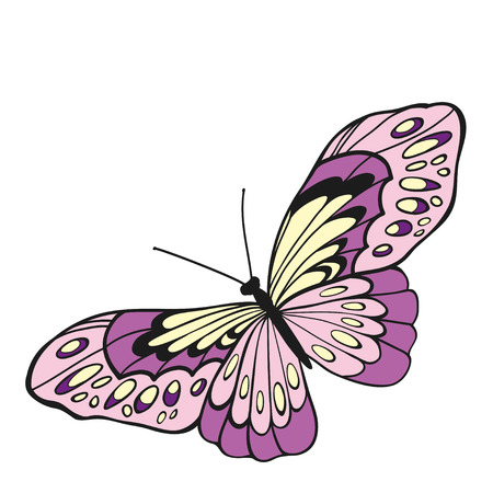 entomological: Pink butterfly with open wings in a top view on white background. Illustration