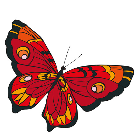 entomology: Red butterfly with open wings in a top view on white background.