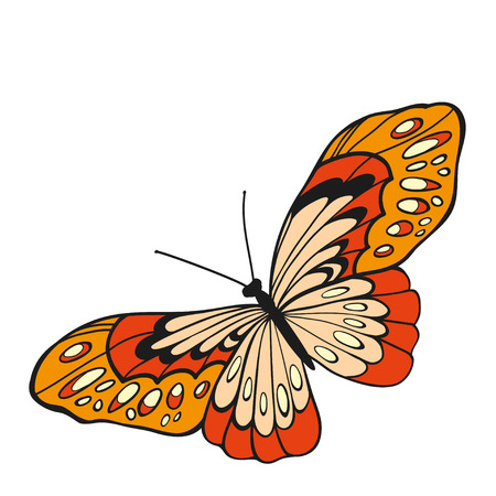 red butterfly: Red butterfly with open wings in a top view on white background.