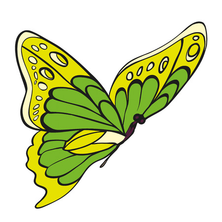 entomological: Green butterfly on white background. Hand-drawn contour lines.