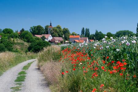 opiate: Rural road to beautiful Czech village through poppy field