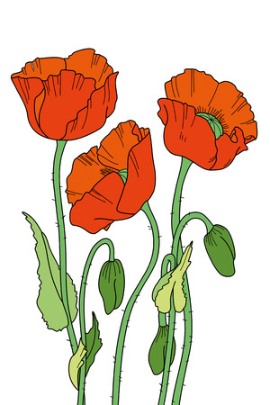 isolated flower: Hand-drawn red poppies. Elegant floral element for design. It can be used for decorating of invitations, greeting cards, decoration for bags, t-shirt, cover