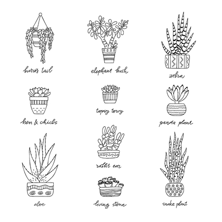 House Plants in decorative pots with a handwritten title. Hand drawn Succulent isolated on white background. Doodle style set. Vector illustration. Design elements for stamp, poster, stickers 向量圖像