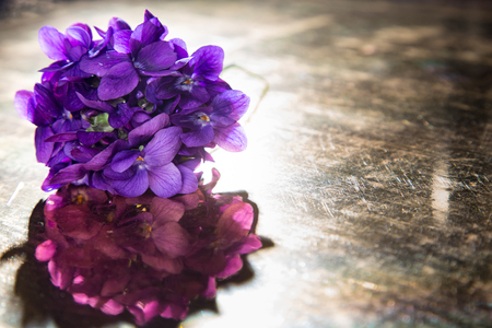 violets: Bunch of violets leaning over an old mirror Stock Photo