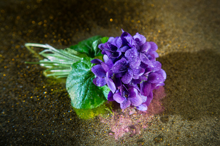 violets: Bunch of violets covered with droplets