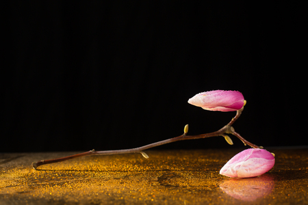 soft peak: Kobus magnolia branch leaning over a reflecting plane full of droplets
