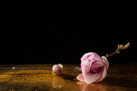 pureness: kobus magnolia branch with flower and bud on a golden floor