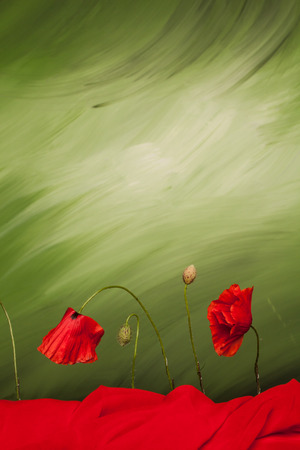 offshoot: Red poppy flowers and buds on green background with red cloth Stock Photo