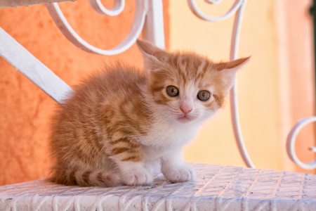 crouched: Crouched orange and white striped kitten on white metal step